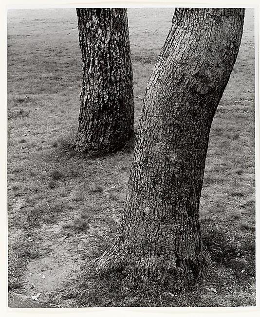 Vineyard Trees  Aaron Siskind   Date:1958