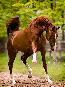 Beautiful! #horses