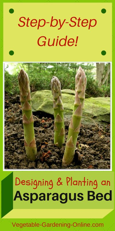 Easy steps for building and planting an asparagus bed that will give you years of harvest! Follow our guide, and enjoy your own fresh asparagus from the garden.