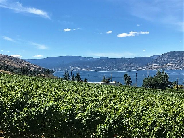 WINE LOVER'S AGREE -ST.HUBERTUS AND OAK BAY WINERY - one of the best places to picnic in the Okanagan.