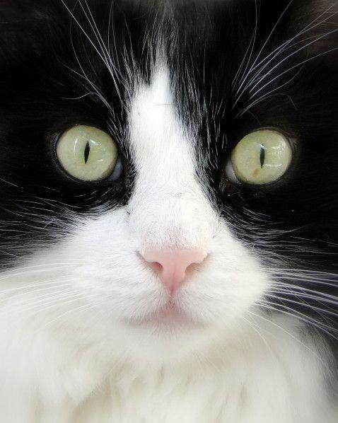 Valérie Albertosi blog chat noir et blanc