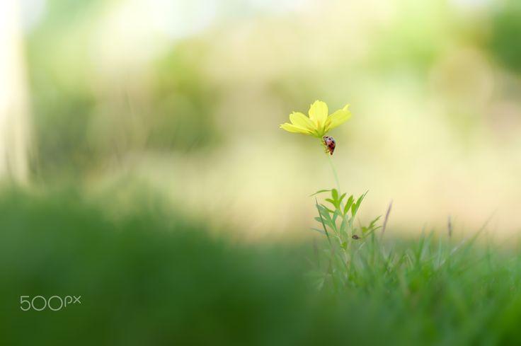 Ladybug Trip - The new journey begins