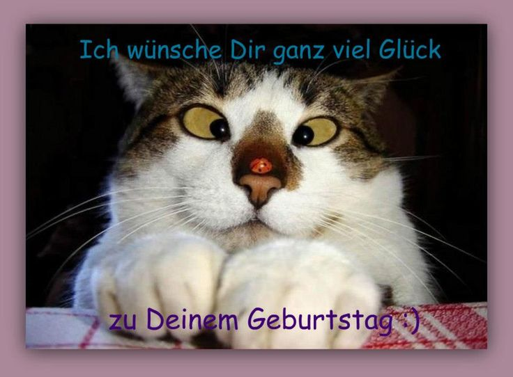 gute deutsche pornoseiten cats pasing