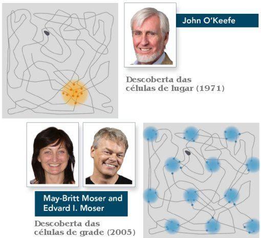 O Prêmio Nobel de Fisiologia ou Medicina 2014 foi concedido à descoberta de um conjunto de células responsáveis por dar ao cérebro um sentido de localização espacial. Metade do prêmio foi concedida...
