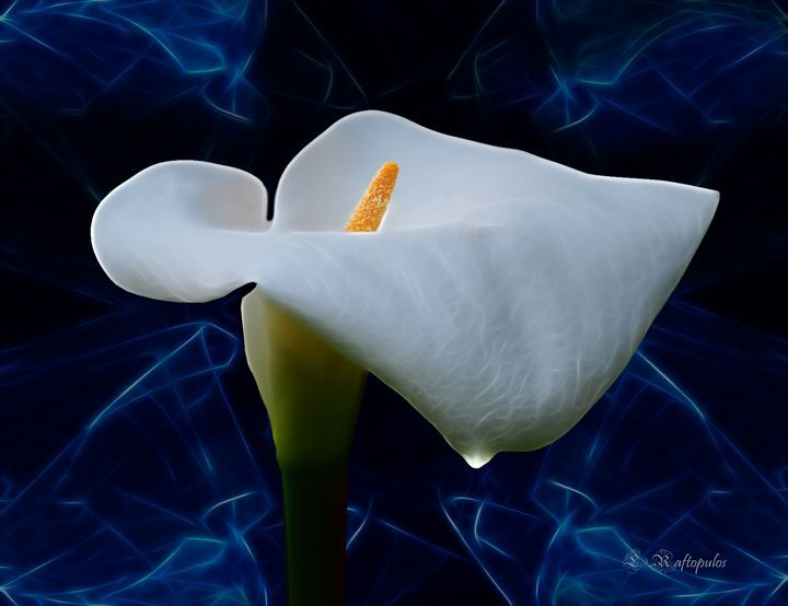 Lily of the valley - Laureenr