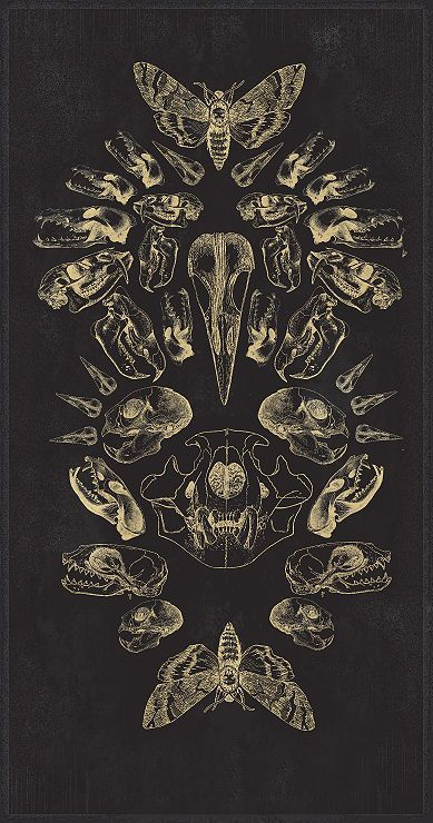 Illustration of bones and insects