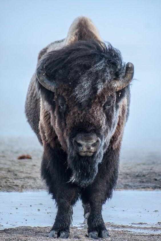 Old Soul Buffalo