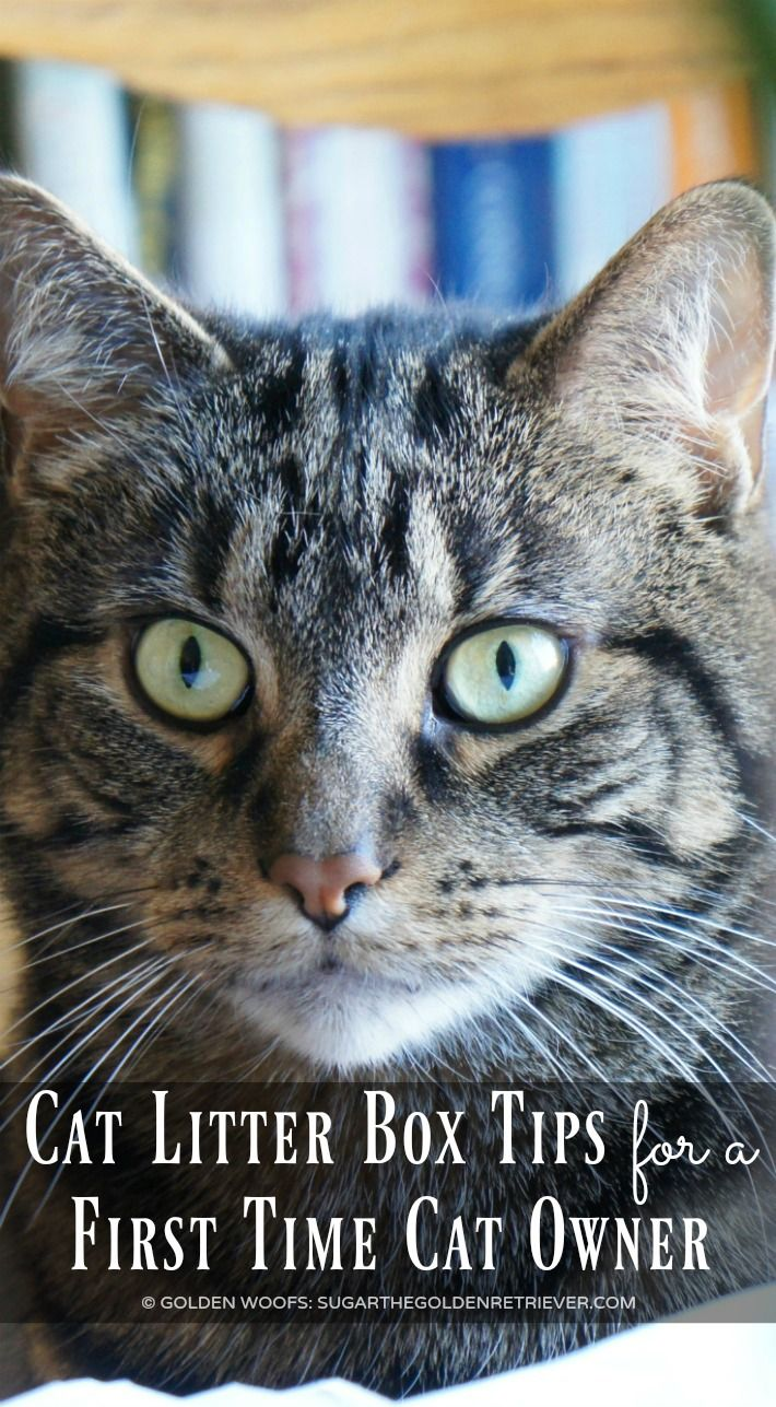 Cat Litter Box Tips for a First Time Cat Owner #ad