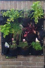 Eetbare Wand  Je kunt de Eetbare Wand beplanten met diverse soorten groenten, kruiden of eetbare bloemen. Ideaal voor toepassingen op balkons, voor appartementen (tuinieren op hoogte),  aan de wand van je buitenkeuken of om mee te nemen op vakantie. Eetbare wand, € 99 via eetbarewand.nl