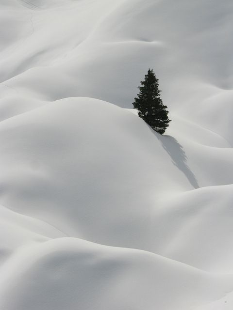tree top, poking out of deep snow. La Plagne, French Alps by David Sadler on Flickr