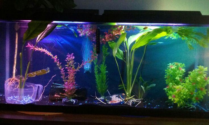 17 best ideas about 55 gallon aquarium on pinterest 55. Black Bedroom Furniture Sets. Home Design Ideas