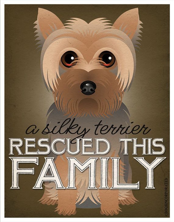 A Silky Terrier Rescued This Family 11x14 by DogsIncorporated