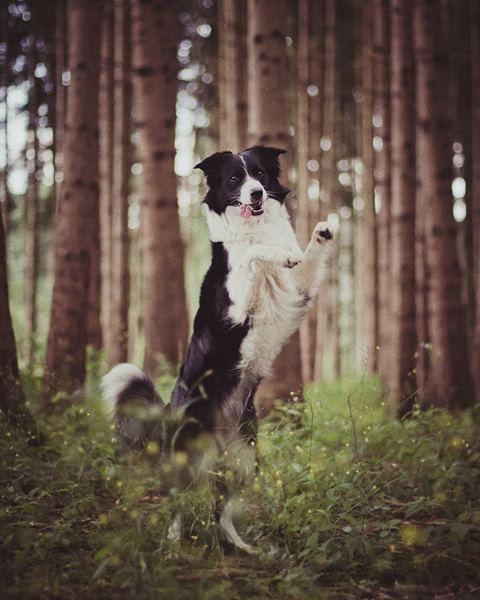 365 historias de perros a través de 365 ilustraciones: el fabuloso mundo canino de Anja Zaharanski | SrPerro.com, la guía para animales urbanos.