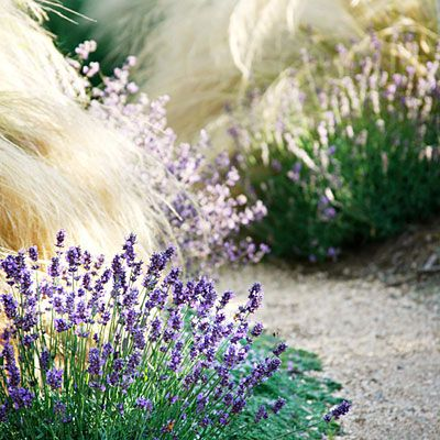 Plant low grasses or perennials along your  path. Lavender and golden Mexican feather grass spill onto the gravel walkway at left, while creeping thyme peeks out from beneath them. Other billowy path edgers include Acorus gramineus 'Ogon', blue fescue, Carex albula 'Frosty Curls', Japanese forest grass, lamb's ears, and sage.