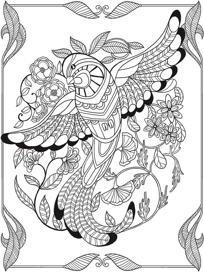 Welcome to Dover Publications ... free coloring book sample page ... Birds of Paradise 3