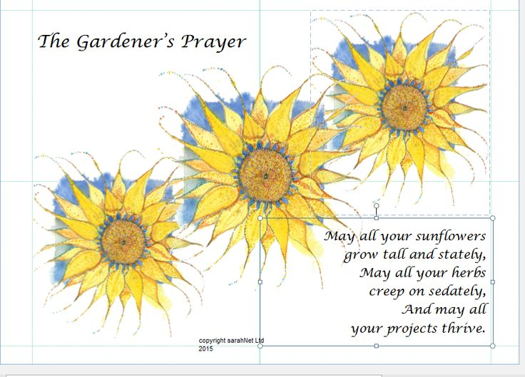 Have just ordered a batch of new sunflower design cards today.
