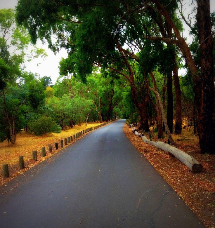A favourite walk - through Jells Park