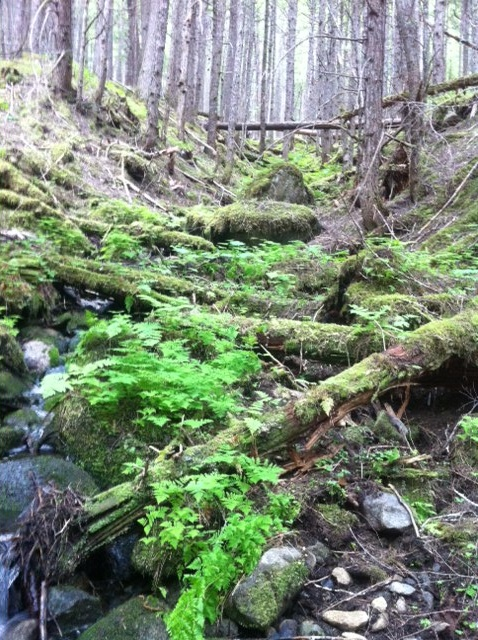 Alaska.  JB took this picture on one of our hikes near Skagway.Favorite Places