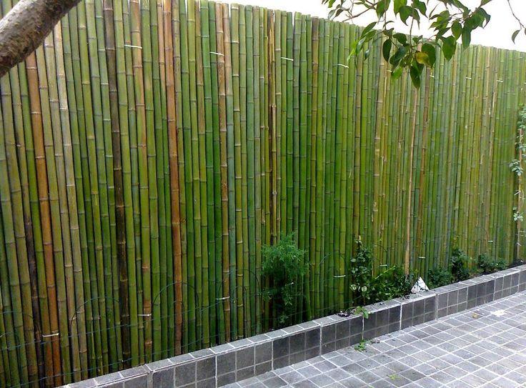 As 25 melhores ideias sobre ca as de bambu no pinterest - Canas de bambu decoracion exterior ...