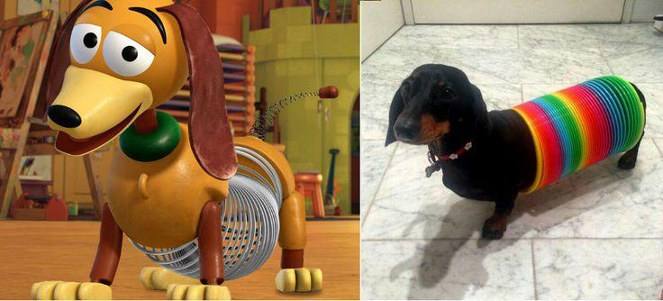 Deze dieren lijken regelrecht uit een Disney- of Pixar-film te komen