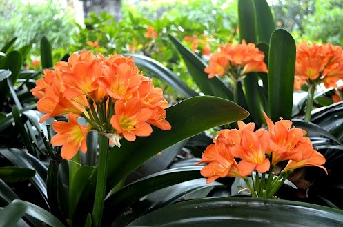 At the Botanical Gardens -Sarah Edgecumbe - Google+