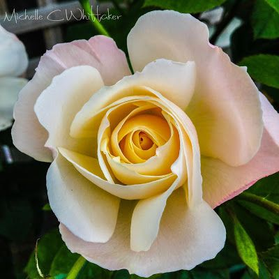 The Fragrant Rose: Happy Holidays