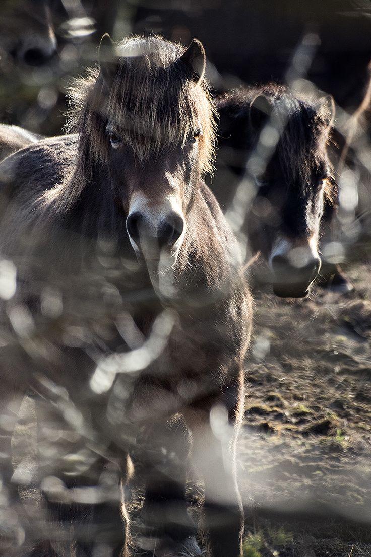 Loveville Photogallery - WILD HORSES - Divocí koně