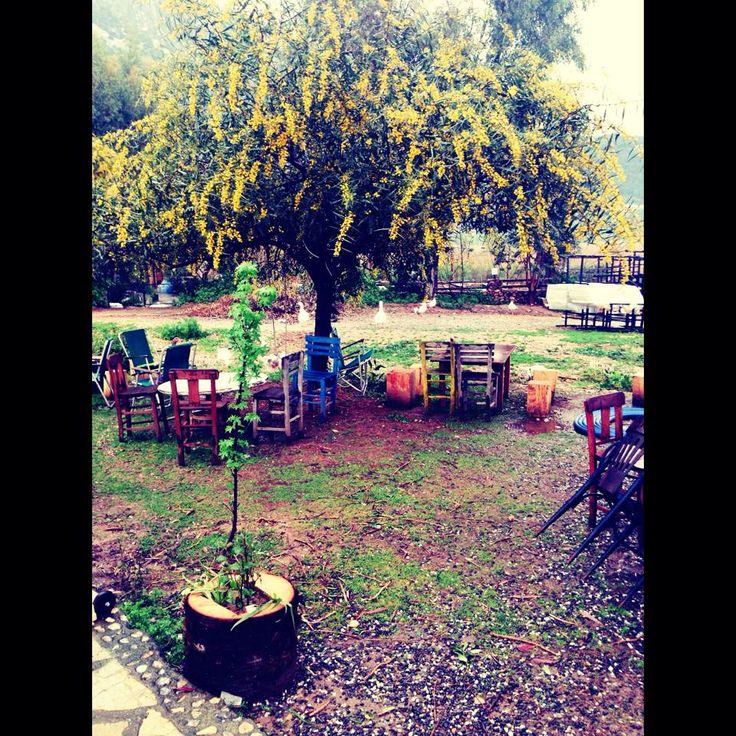 How my garden looks like