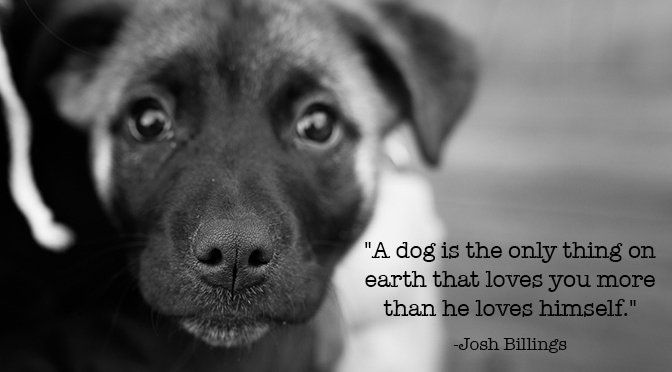 Dog Quotes: 17 Best Dog Lover Quotes On Pinterest