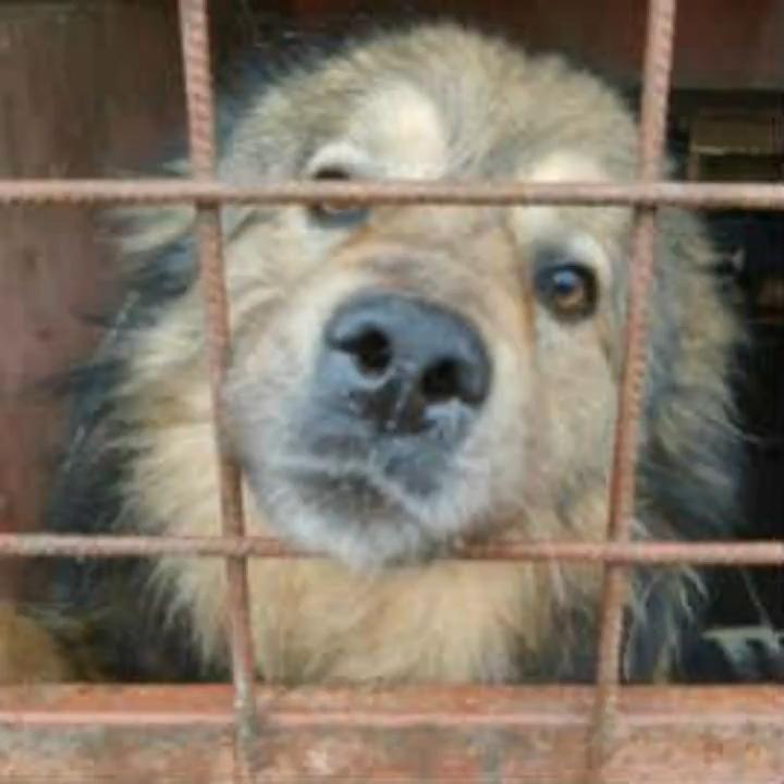 Anton Sucht Ein Zuhause Video In 2020 Lustige Tiere Tierheim Hunde Hunde Vermittlung