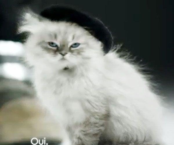 French Cat   Toujours français   Pinterest