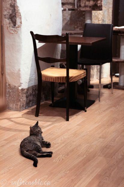 Cafe des chats cat café Paris