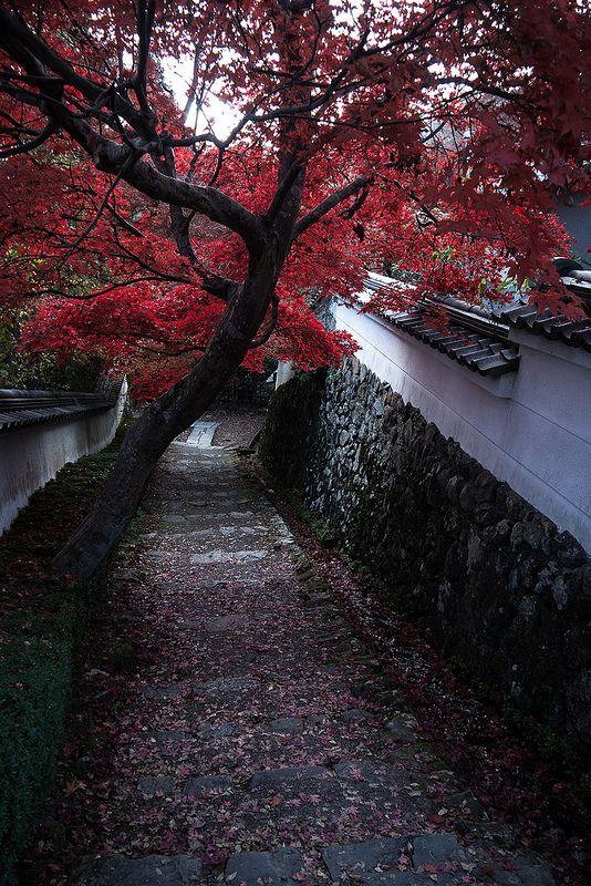 Late autumn in Shouji-ji Temple in Kyoto, Japan. #japan #kyoto #travel #photo