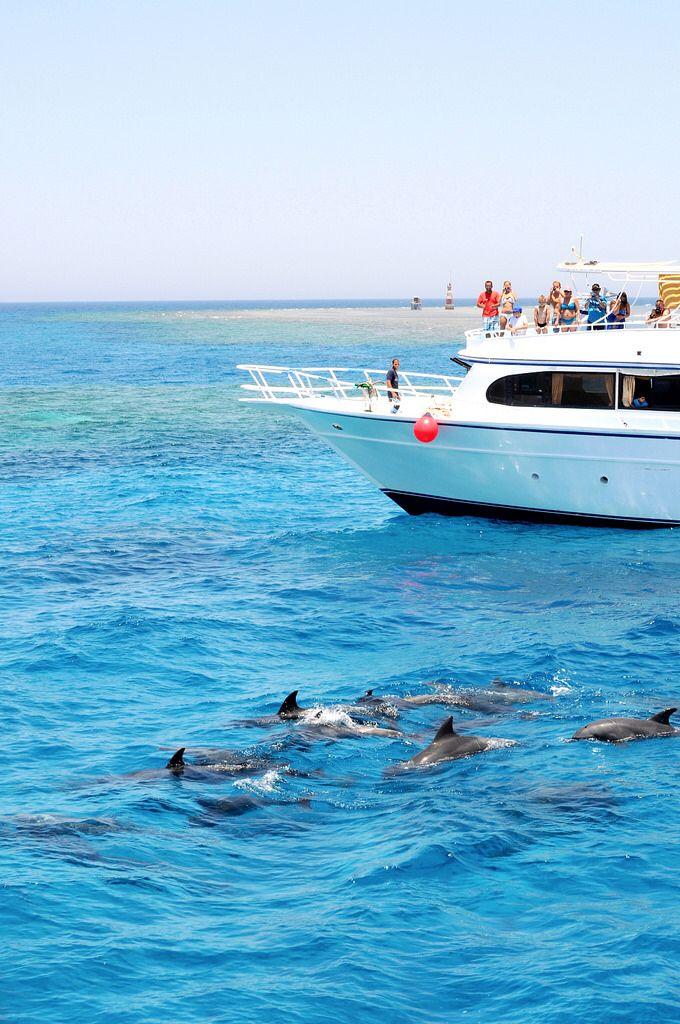 Dolphin safari, Hurghada, Egypt