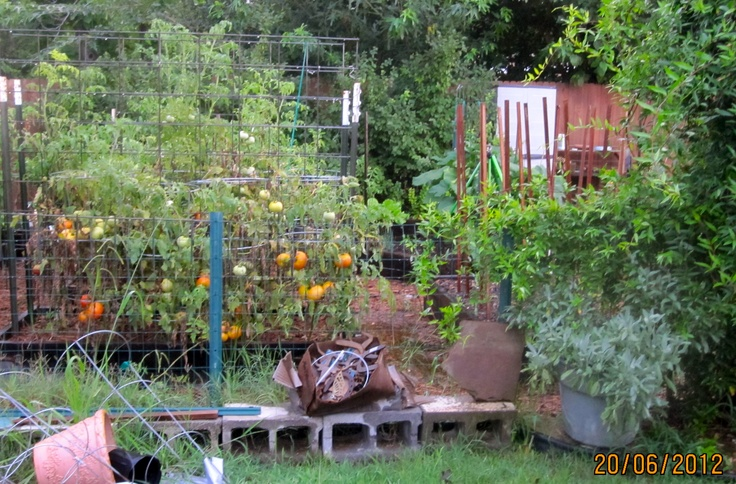 Tomatoes: Organizations Food, Food Gardens