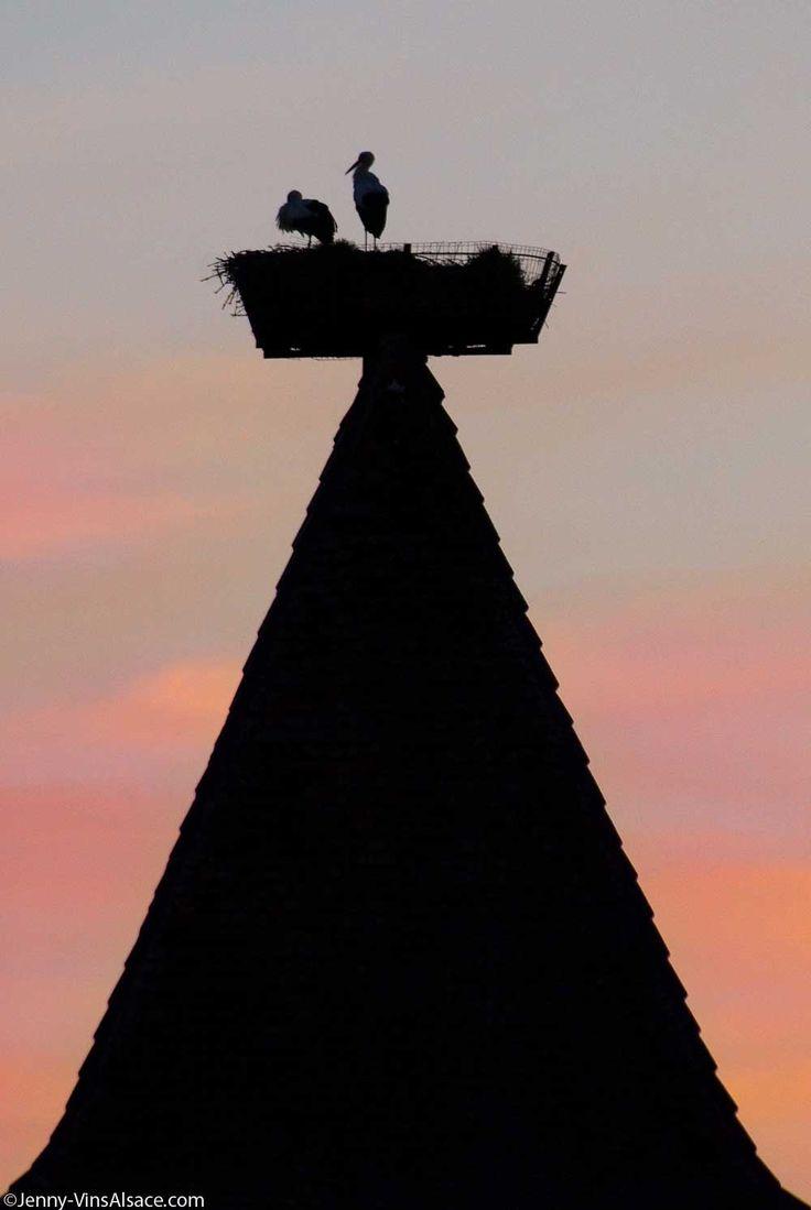 Cigogne d'Alsace - ©Jenny-VinsAlsace.com
