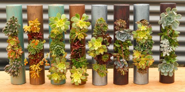 These cylinder succulent planters are fantastic! They can be vertical, horizontal, suspended...  Fiori-Cylinders