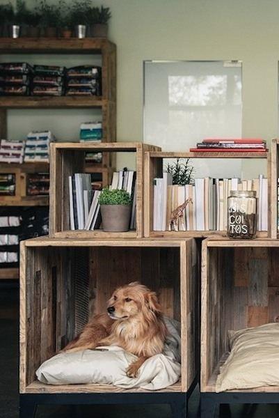 Que tal essa estante de pallets que se adaptou para ter um cantinho para o pet também? Incrível!