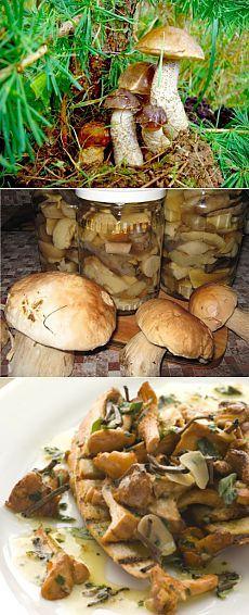 Подосиновики и подберезовики: маринуем, замораживаем и сушим на зиму / Простые рецепты