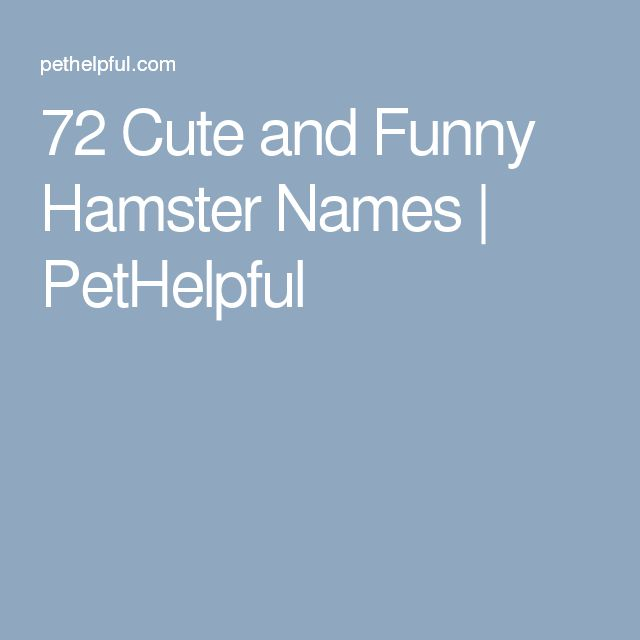 72 Cute and Funny Hamster Names | PetHelpful