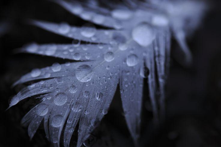 #Tamron #Winter #Photography #DSLR