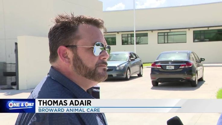 9/25/17 Broward Animal Care executive director Thomas Adair has resigned his position following a Local 10 News report, showing he and other county employees changed dog and cat death records in a way that made it appear pet owners whorequested their animals be adopted had instead asked that they be euthanized.