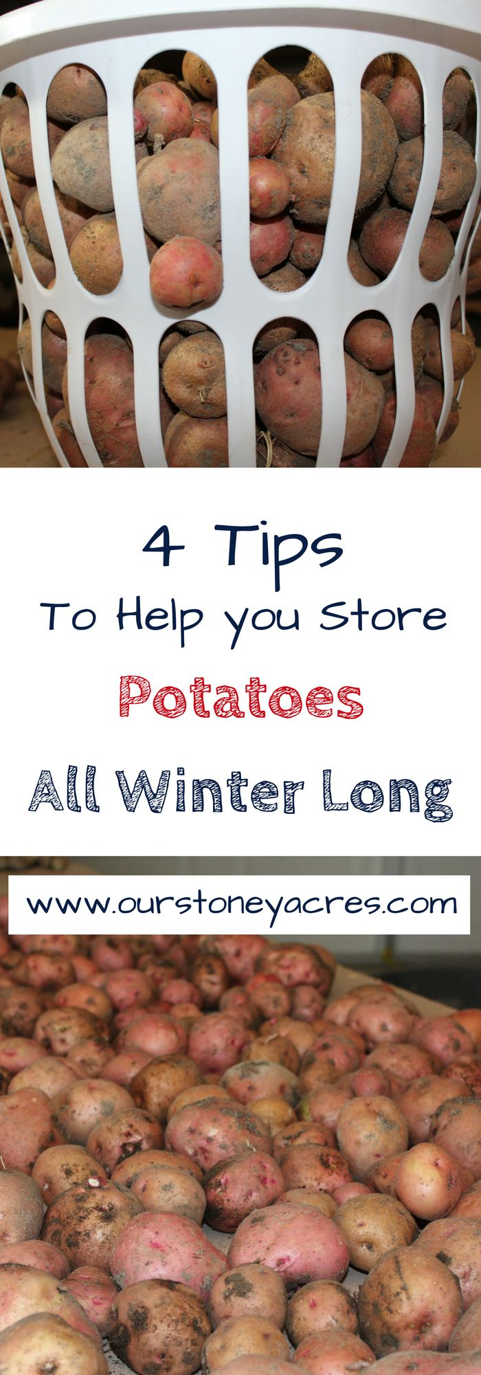 Storing Potatoes. Storing potatoes properly is an important part of our gardening. We grow a lot of potatoes (some years over 250 pounds) so it is important that we keep those potatoes lasting as long as possible in our winter storage.
