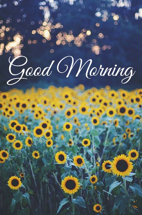 Good Morning.  Good Morning! see a vast collection of good morning cards for social media! click