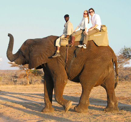Elephant Rides in South Africa