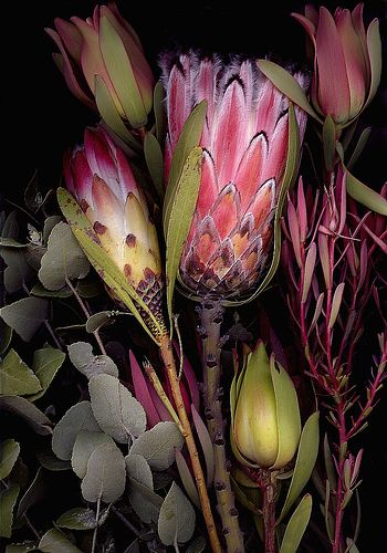 Scanner Art- Flowers by spitfirelas, via Flickr