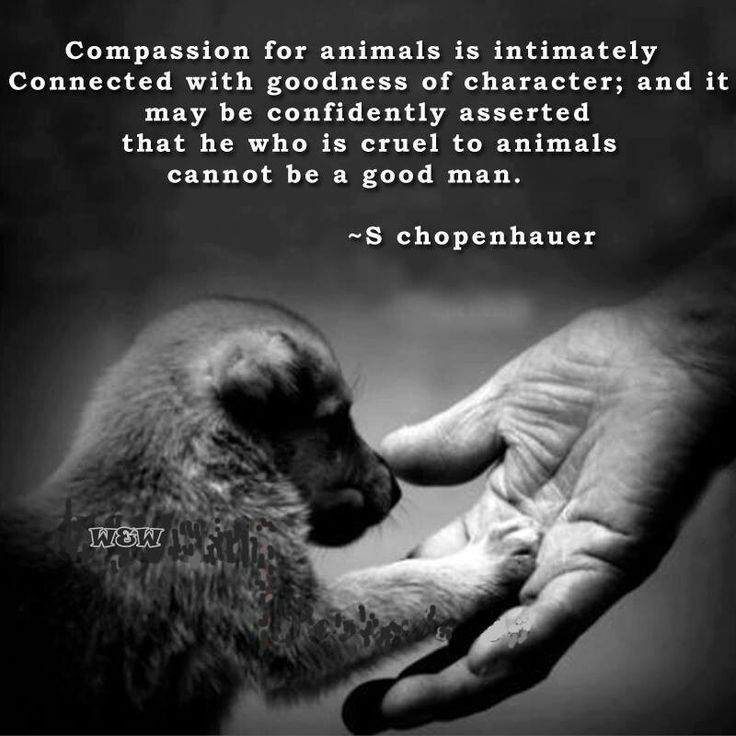 """""""Compassion for animals is intimately connected with goodness of character; and it may be confidently asserted that he who is cruel to animals cannot be a good man."""" - S Chopenhauer"""
