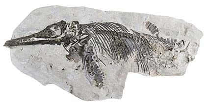 New species of extinct British marine reptile emerges from Doncaster Museum storeroom