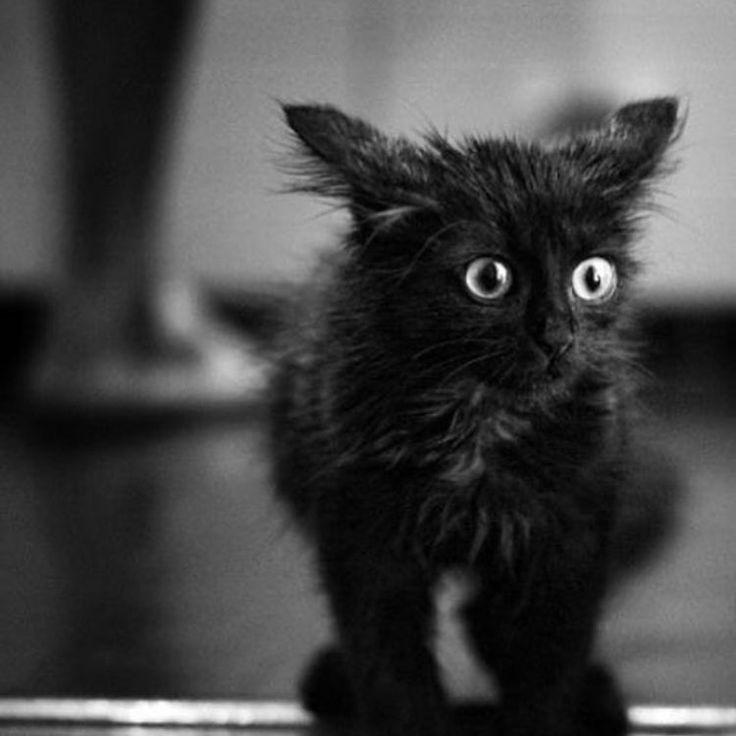 """What?! Weekend gone so soon"" Adorable kitty to help beat your Sunday blues  - - - Re-post from @viralgothdaily #cat #cute #cutecat #blackcat #blackcatsrule #instacat #instacats #kitten #kittenlove #crazycatlady"