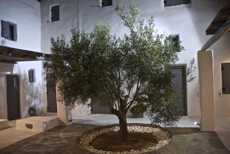 Architectural details of Cycladic residences in Paros island, Greece. Olive tree in a closed courtyard.